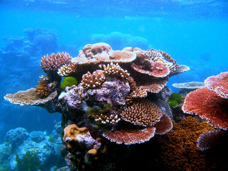 Steinkorallen im Great Barrier Reef, Australien
