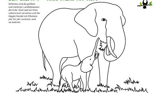 referat elefant bilderzum ausmalen  ausmalbilder