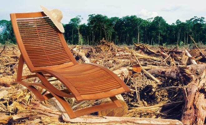 Tropenholz Zerstort Regenwald Erfahre Was Du Tun Kannst