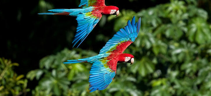 Regenwald Tiere Papageien Abenteuer Regenwald