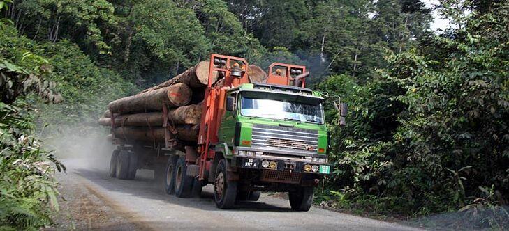 Abholzung Des Regenwaldes Abenteuer Regenwald