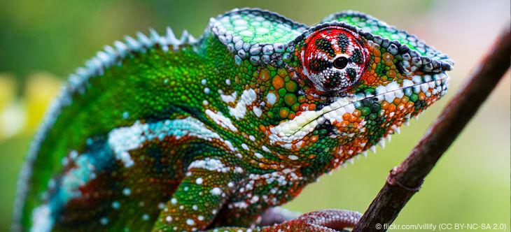 regenwaldtiere  chamäleons  abenteuer regenwald