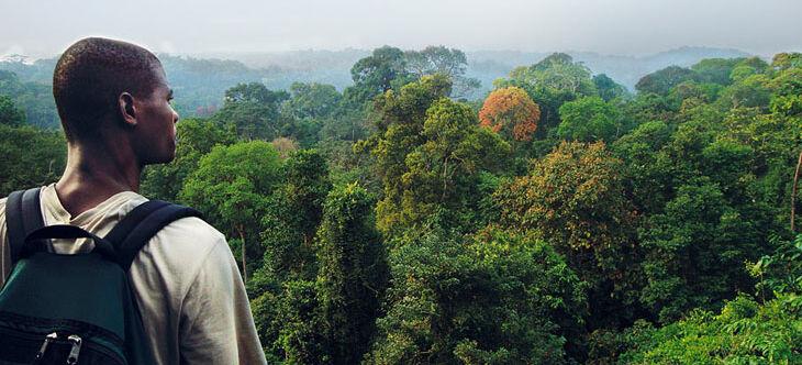 grünes paradies regenwald  abenteuer regenwald