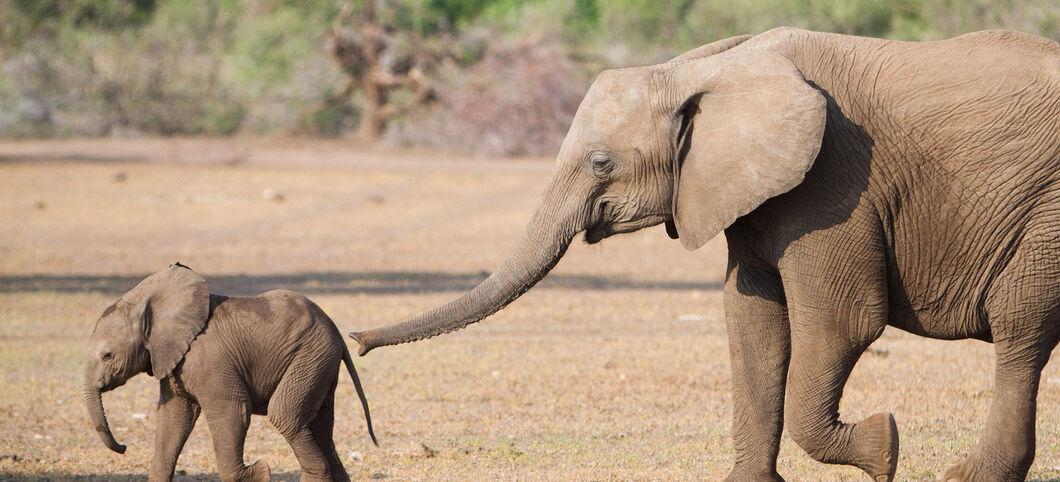 teste dein wissen: unser elefanten-quiz - abenteuer regenwald